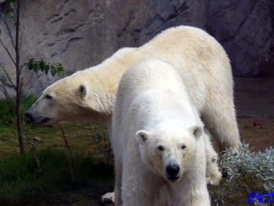 Arktos und Nanuq warten auf die Nachmittagsjause, 24. Mai 2010