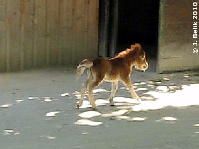 Zwergi, 10. Juli 2010