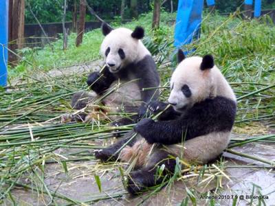 Fu Long (li) und Wu Jie, 9. Juli 2010