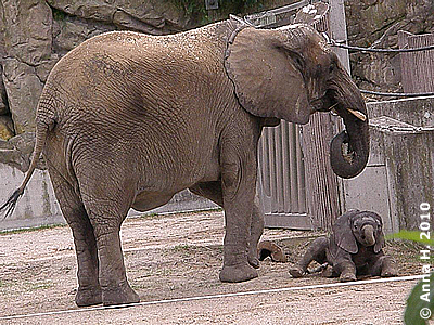 Sooo ein müder Mini-Bulle, 15. August 2010