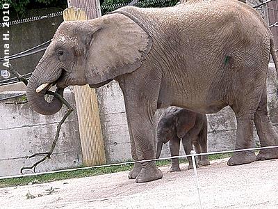 Numbi mit Mini-Eli, 14. August 2010