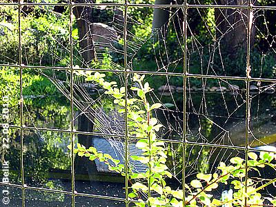 War diese Spinne auf Drogen? Spinnennetz bei den Tigern, 22. August 2010