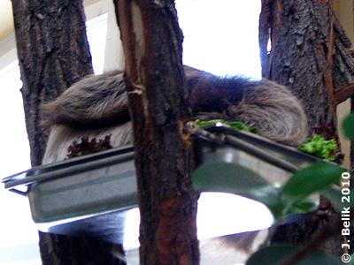 Junior Sid schläft auf dem Futterschüsserl, 5. August 2010