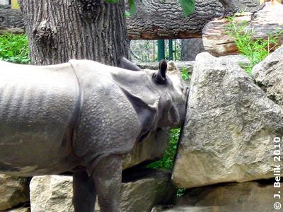 Sundari will zwischen den Felsen durch, 5. August 2010