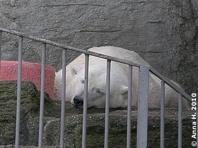 Bei aller Gastfreundschaft, auf dem eigenen Liebliungsplatzerl schläft es sich doch am besten! Glückliche Tania, 29. August 2010