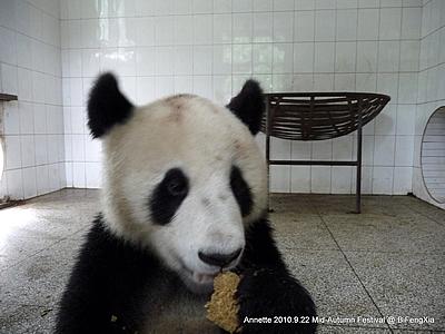 Fu Long und sein Panda-Brot, Bi Feng Xia, 22. September 2010