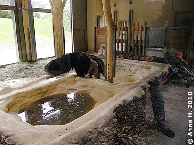 Sie marschiert schnurstraks rüber ins Zuhause der Tapire ...