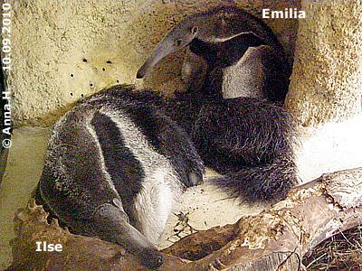 Ilse und Emilia, 10. September 2010