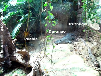 Durango und Puebla, hoffentlich legt Puebla bald Eier ins Nest ab, 4. SEptember 2010