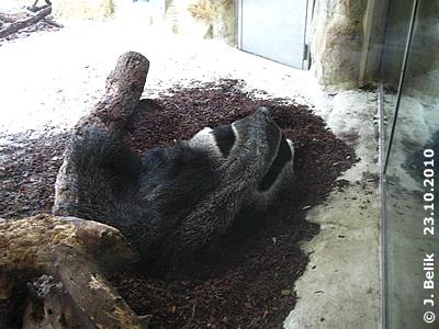 Ilse schläft auf ihrem absoluten Lieblingsplatzerl, 23. Oktober 2010