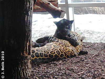 Joschi und Sheila, 20. Jänner 2010