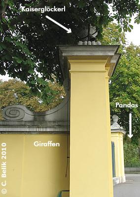 Das Kaiserglöckerl findet man am Ende der Giraffen-Anlage, 29. September 2010