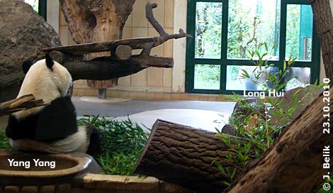 Yang Yang macht gerade eine Pause vom Baby, Long Hui wartet draußen schon ungeduldig darauf, dass der Schuber endlich auf geht, 23. Oktober 2010