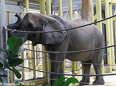 DRumbo bekommt eine Belohnung nach dem Duschen, 6. November 2010