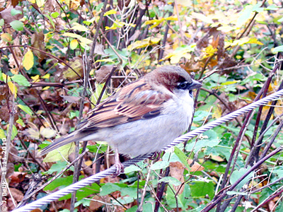 Nicht nur Eichkatzerl, auch Vögelchen können ganz schön betteln, 18. November 2010