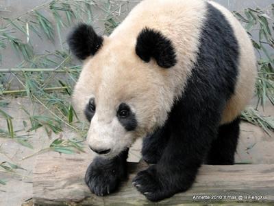 Weihnachtsgrüße von Fu Long! Bi Feng Xia, 25. Dezember 2010
