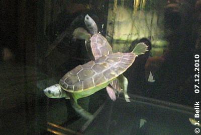 ... im Aquarienhaus (Krokopavillon), 7. Dezember 2010