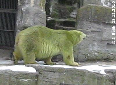 "Tania als ""Grünbär"", 28. Dezember 2010"
