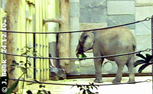 Mongu mit dem geklauten Salat, 24. Dezember 2010