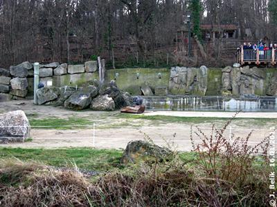 Suchrätsel: Wo ist ein Elefant versteckt? 16. Jänner 2011