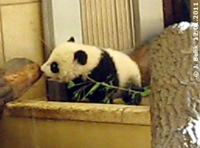 Fu Hu, 12. Jänner 2011 (Screenshot aus Video)