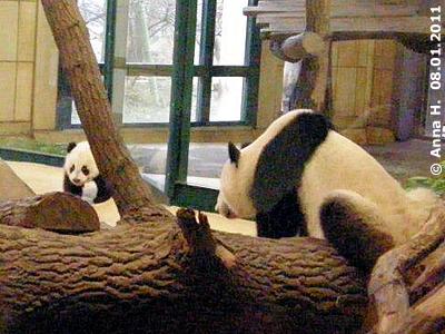 Yang Yang läßt ihren kleinen Sohn nicht aus den Augen, 8. Jänner 2011