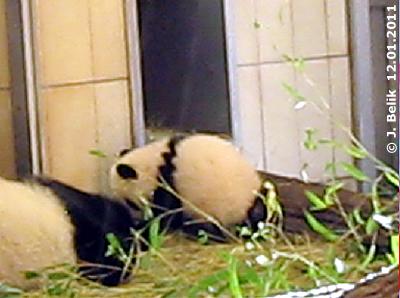 Wird das gezackte Schulterband Fu Hus Markenzeichen? 12. Jänner 2011 (Screenshot aus Video)