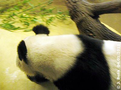 Yang Yang beim Herumwandern, 4. Jänner 2010