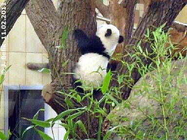 Baby Monster Fu Hu unterwegs, 11. Februar 2011