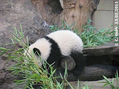 Fu Hu will von der unteren Plattform runter klettern ...