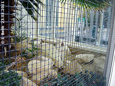 BLick in das Zuhause der Spaltenschildkröten im Wintergarten der Savanne, 23. März 2011