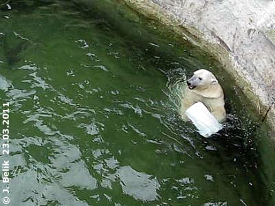 Eine kurze Verschnaufpause, bevors weiter geht, Tania, 23. März 2011 (Screenshot aus Video)