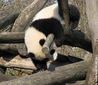 Fu Hu, 29. März 20011