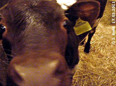 Neugierdsnase mit Glupschaugerln, 17. März 2011