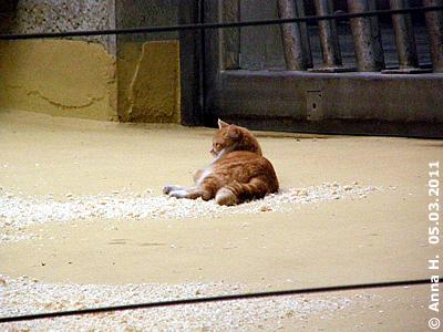 Rosi bewacht die Elis in ihrem Reich, 5. März 2011