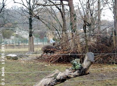 """Das """"Versteck"""" der Tapire in der Außenanlage, 17. März 2011"""