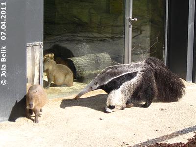 Hallo Capybaras ...! Ilse, 7. Apri 2011