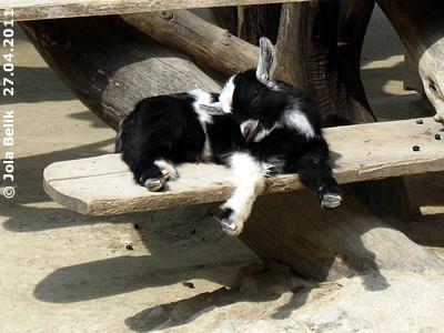 So ein müdes Zwergerl! 27. April 2011