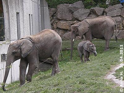 Tuluba mit Mama Numbi und Bruder Kibo, 16. April 2011