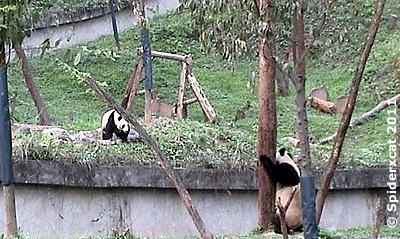 """""""Hallo Cousin(e)"""", Zhe Zhen (li) und Fu Long (re), Bi Feng Xia, 29. April 2011 (Screenshot von Pandacam)"""
