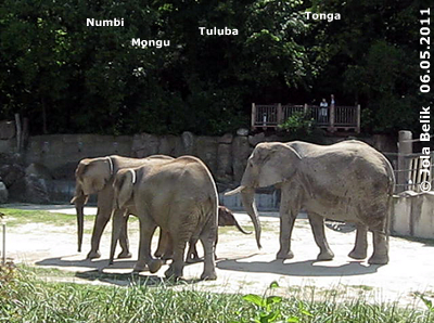Numbi, Mongu, Tonga und Baby Tuluba, 9 Monate alt, 6. Mai 2011 (Screenshot von Video)