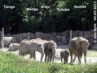 Tonga, Mongu, Kibo, Tuluba und Numbi, 6. Mai 2011 (Screenshot von Video)