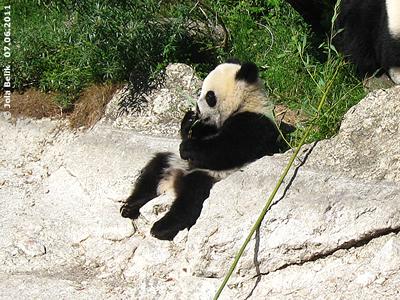 Fu Hu, 7. Juni 2011