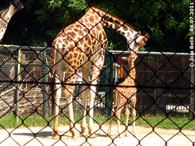 Rita und Baby Arusha, zwei Tage alt, 6. Juli 2011