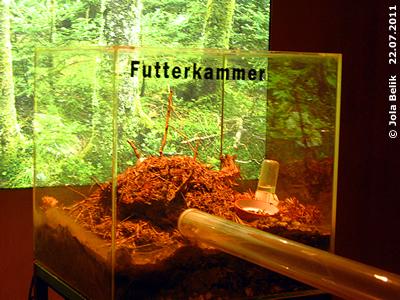 Die Futterkammer der Waldameisen, 22. Juli 2011