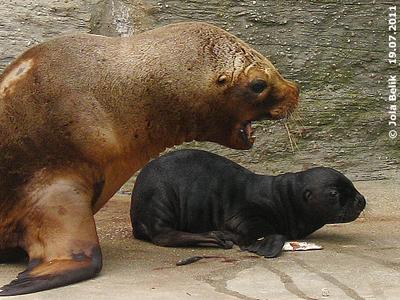 Enya mit ihrem Baby, hier schimpft sie grad Richtung Julian, als er wieder hinaus geht. 19. Juli 2011