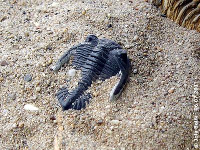Trilobit, Wüstenhaus, 6. Juli 2011