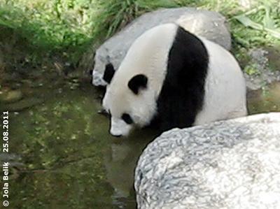 Yang Yang, 25. August 2011