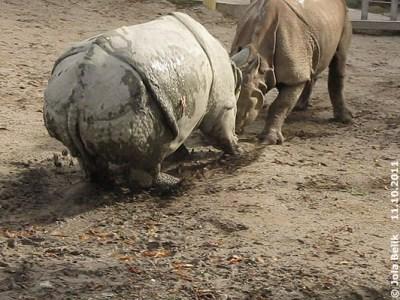 Das Bremsen ist nicht so einfach! Jange (li) und Sundari (re), 11. Oktober 2011