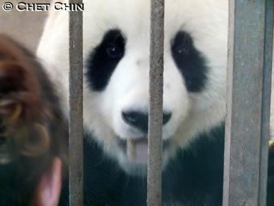 ... außerdem gab's drinnen Pandabrot und Leckereien von Volontären fürs Gebuirtstagskind ...